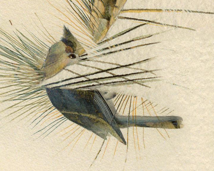 Birds de Yann Malka